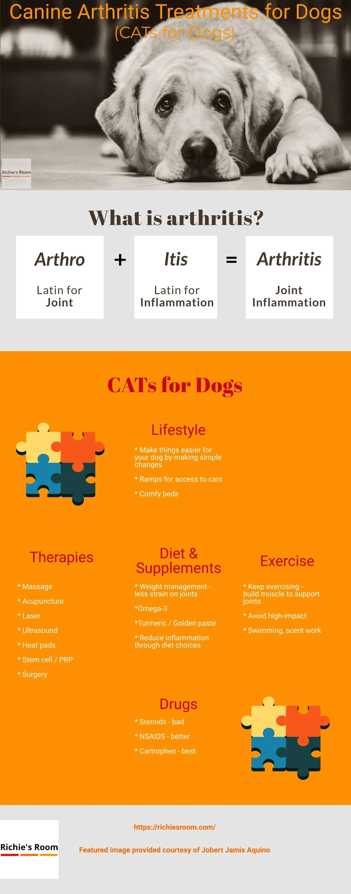 canine arthritis bible - infographic