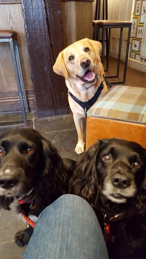 Puppy socialisation plan - Harvey the Labrador and friends in the pub