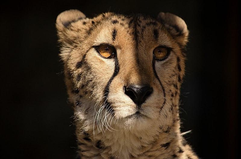 Blogging for fun not profit - cheetah