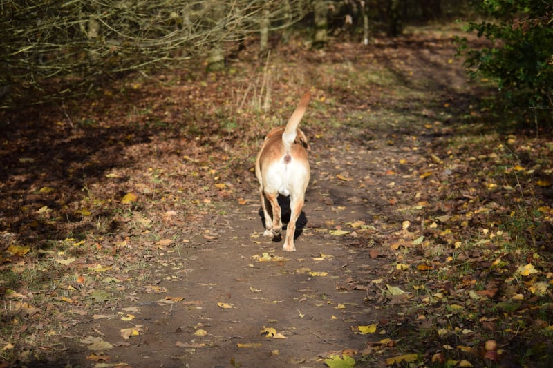 Rock-steady Recall for Dogs - not the required response