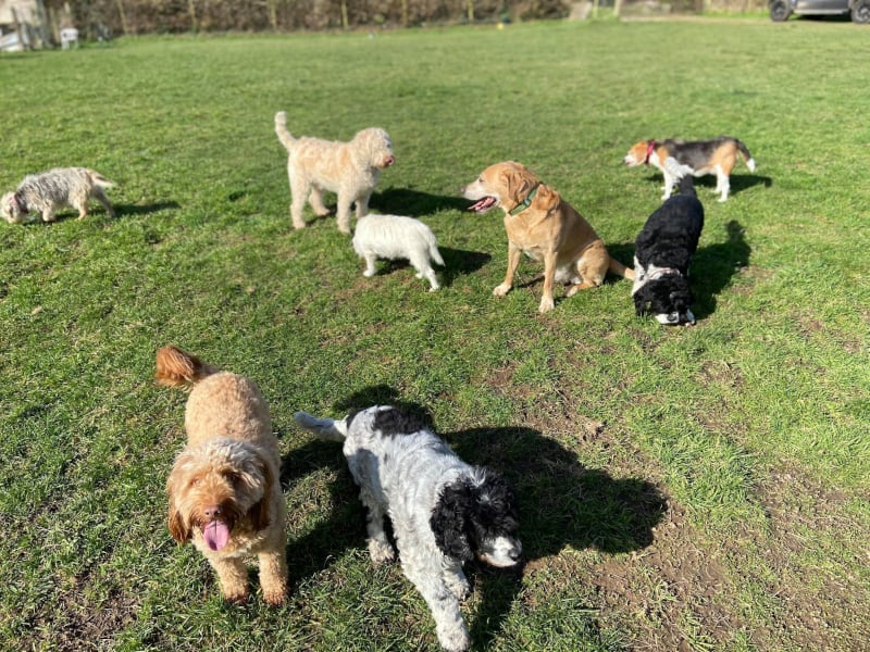 Rock-steady Recall for Dogs - proofing - distraction