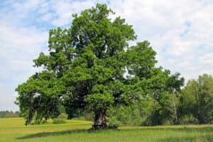 quickly learn 50 us states and capitals - oak tree