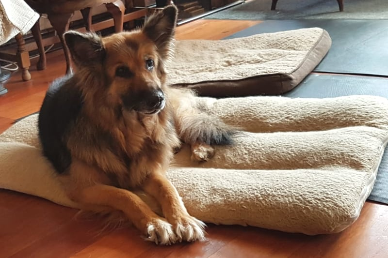 dog trainer interview theo stewart - milly