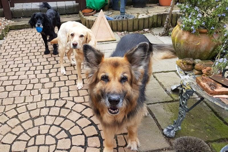dog trainer interview theo stewart - pickle zara & milly