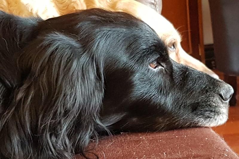 dog trainer interview theo stewart - pickle zara
