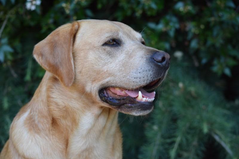 Positive dog training - Harv profile - featured-img