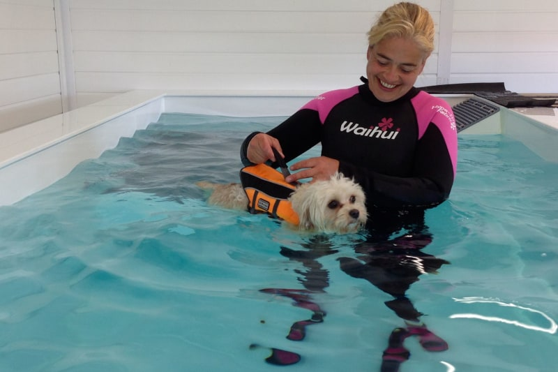 dog trainer interview lisa jackson - hydrotherapy