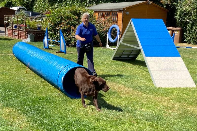 dog trainer interview lisa jackson - nahla doing agility