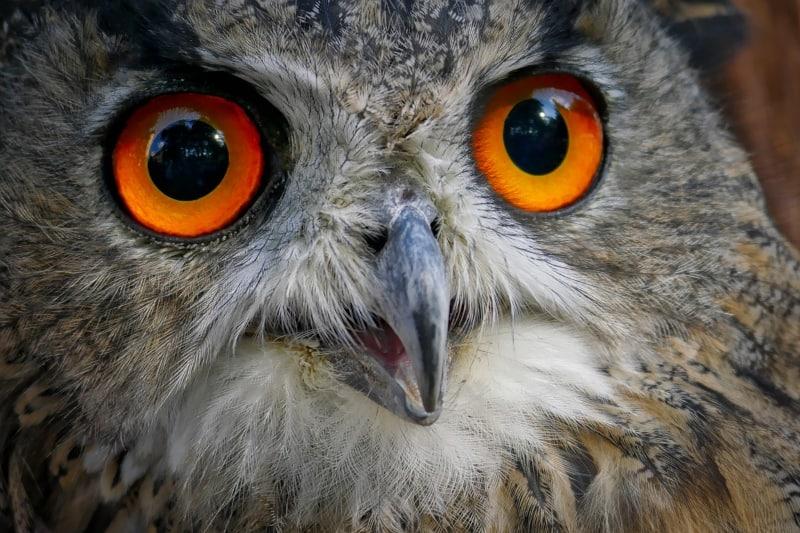 dog trainer interview lisa jackson - owl