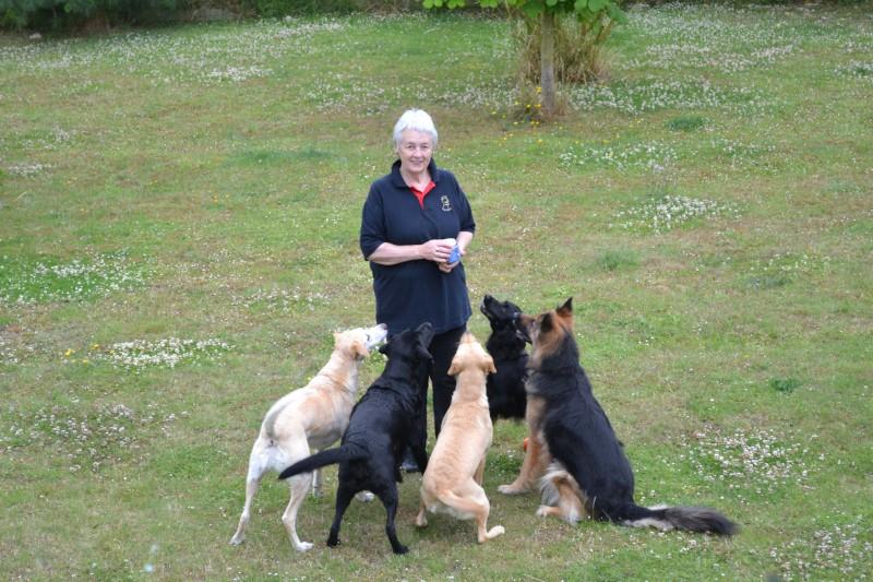 dog trainer interview theo stewart - theo - featured-img