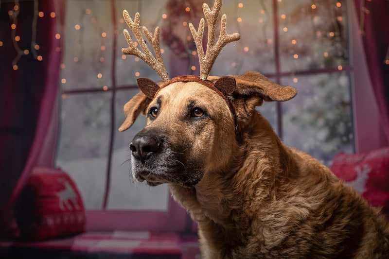 Best Christmas Presents for Dogs - dog wearing antlers