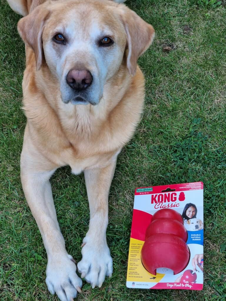 Best Christmas Presents for Dogs - harvey with new Kong