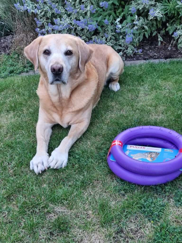 Best Christmas Presents for Dogs - harvey with new puller rings